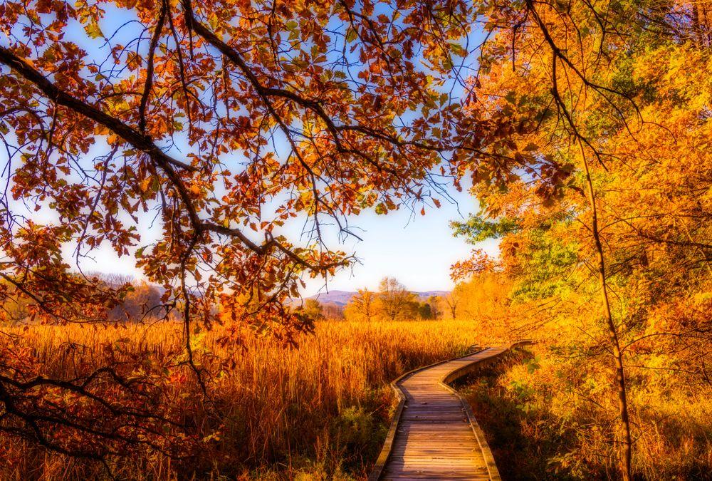 Boardwalk at Wawayanda State Park