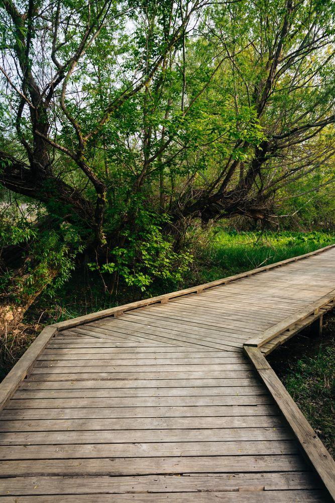Boardwalk trail in Wildwood Park