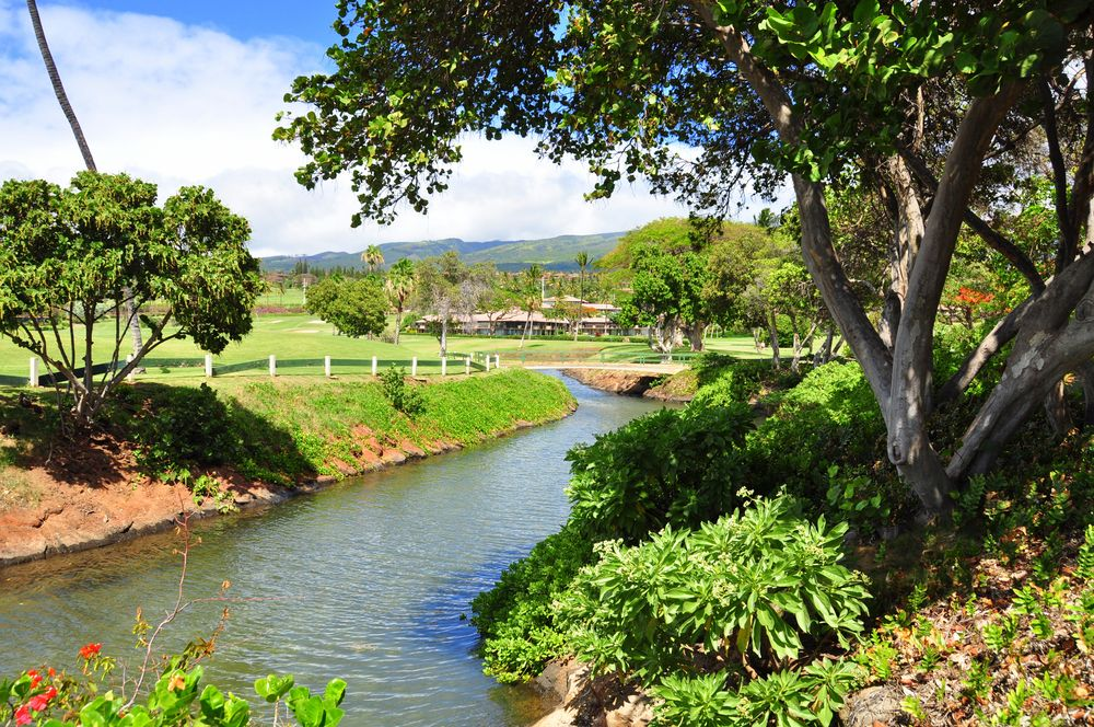 A River in golf course in Kaanapali