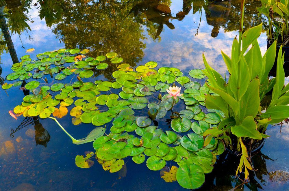 Pond at Sibley Park