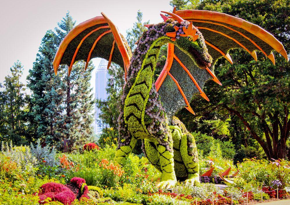 A Dragon Figure in Atlanta Botanical Gardens