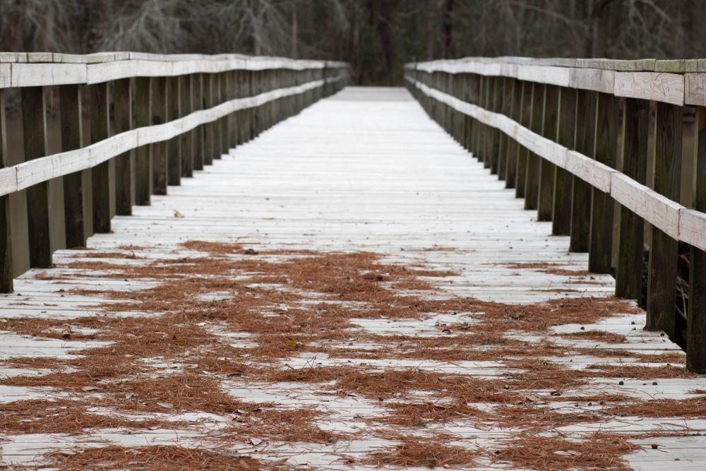 Wheeler Lake in Decatur Alabama