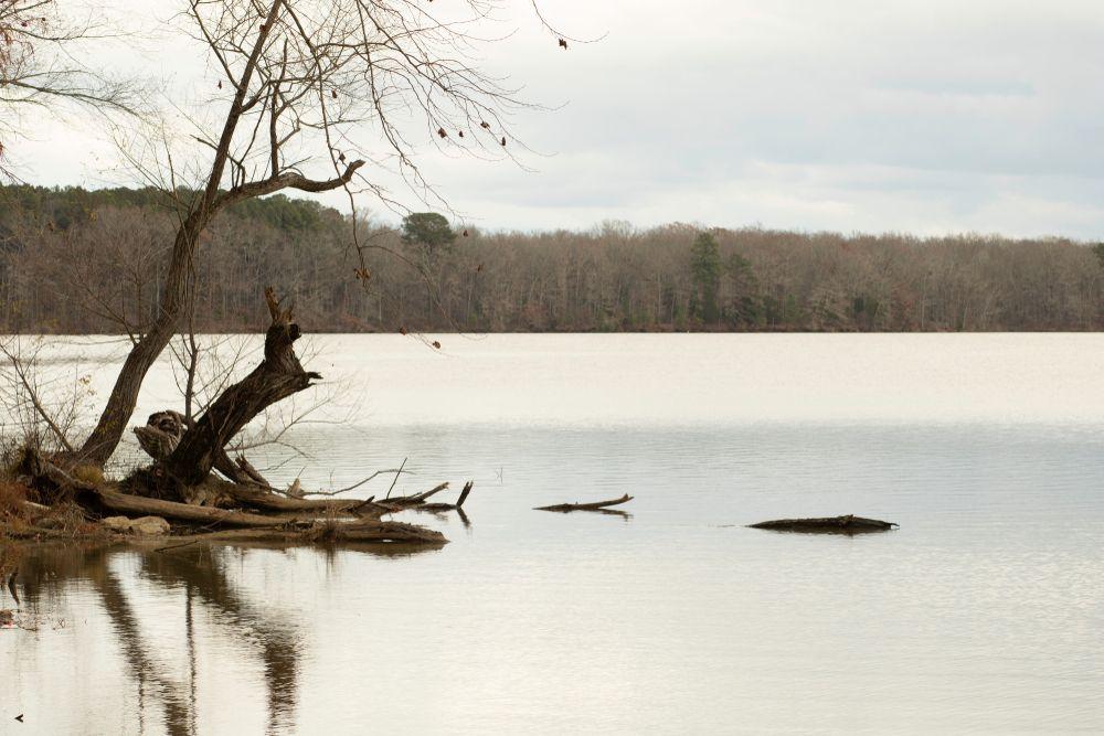 View of Wheeler Lake
