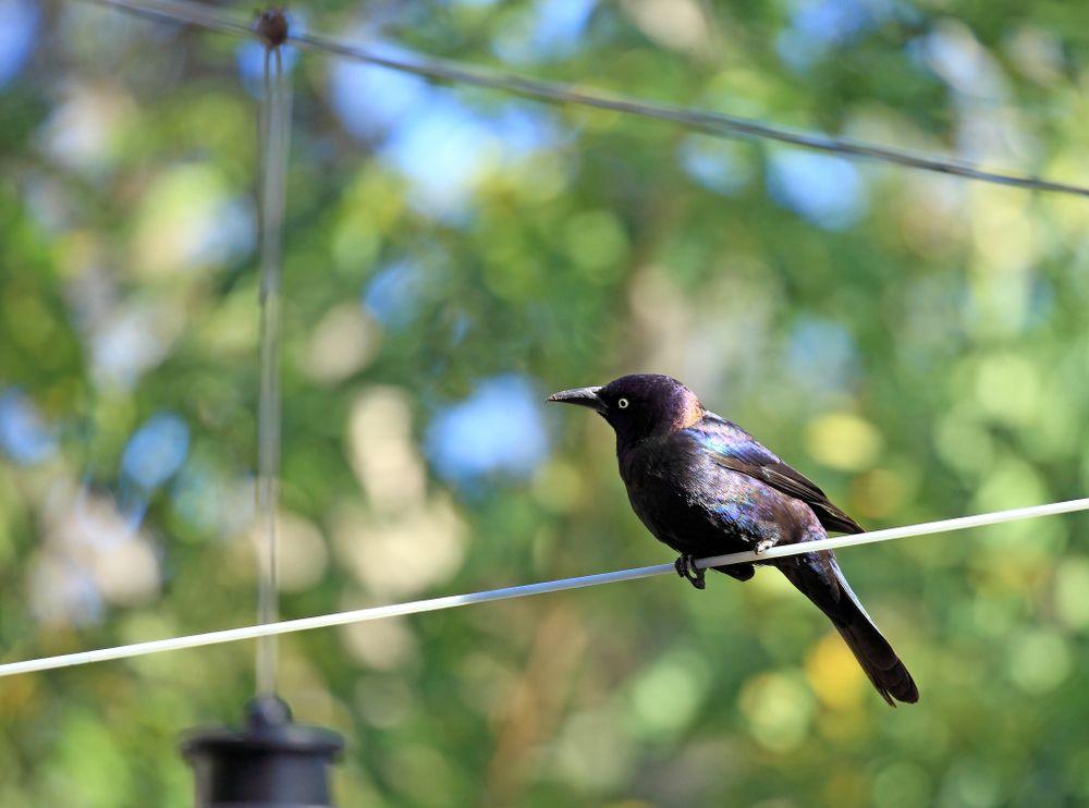 A Bird in Charlotte Harbor Preserve State Park