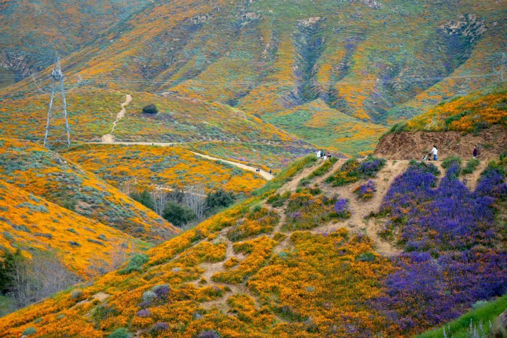 Stunning View of Walker Canyon Trail