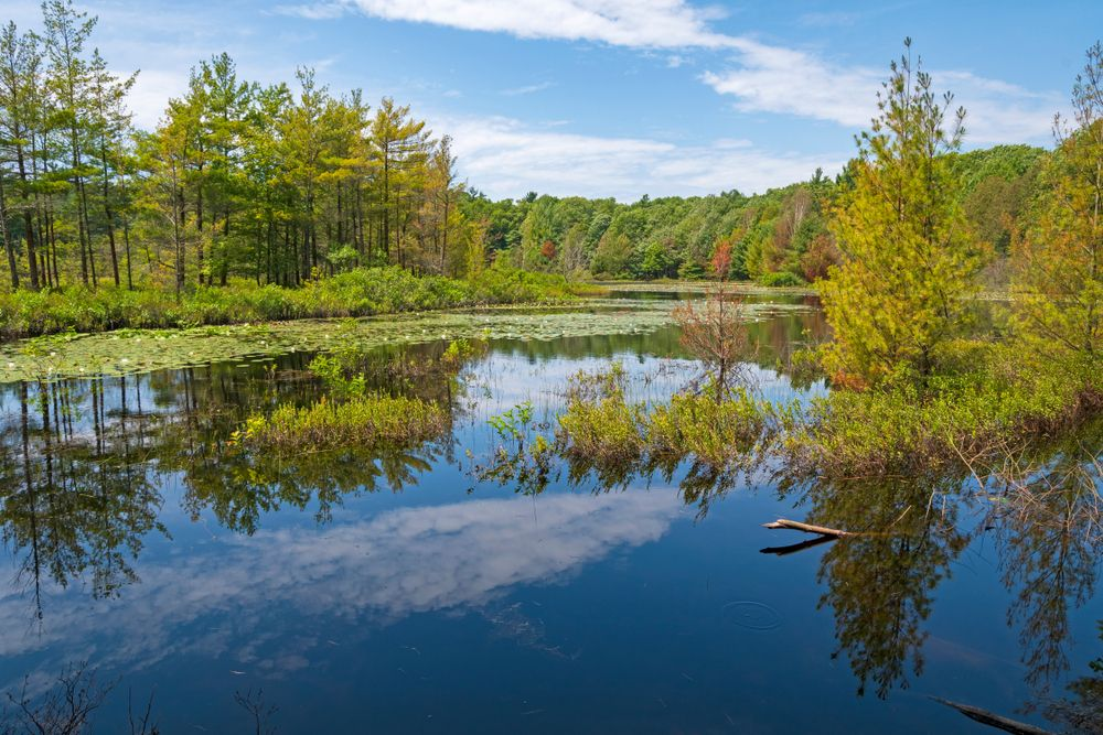 Lake in Muskegon State Park