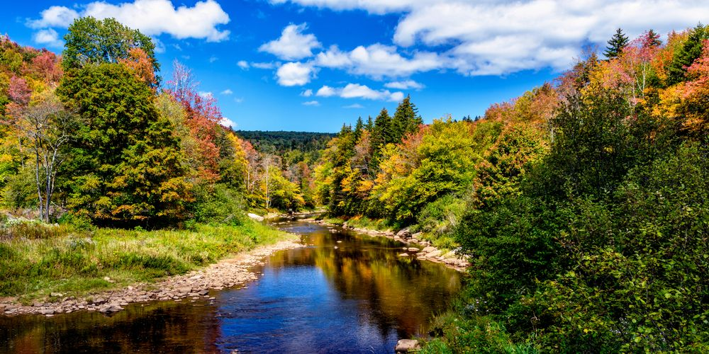 View of Monongahela National Forest,