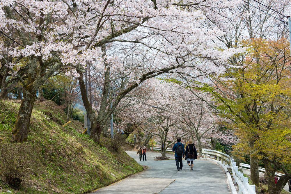 People in Mt. Yoshino