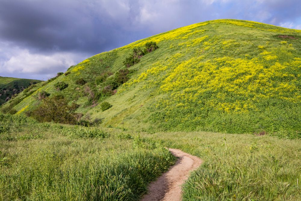 A Trail in Chino Hills State Park