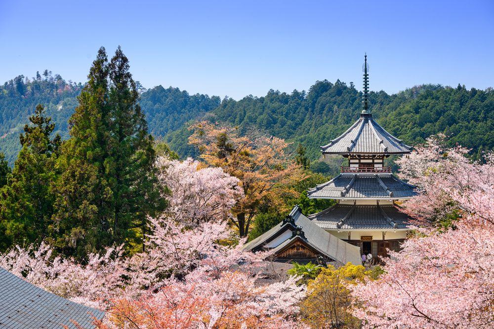 Beautiful Mt. Yoshino