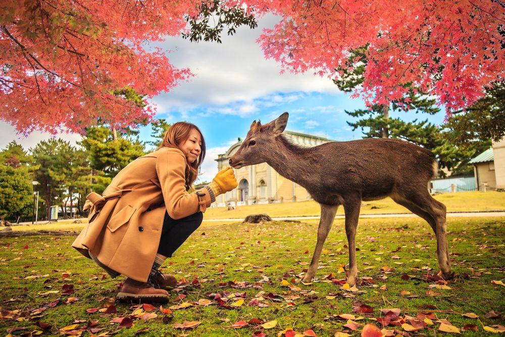 A Woman and a Deer at Nara Park