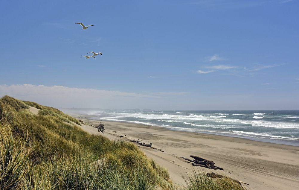 View of Bullards Beach State Park