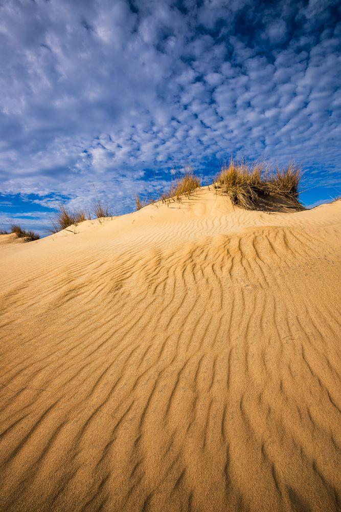 Sand in Jockey's Ridge State Park