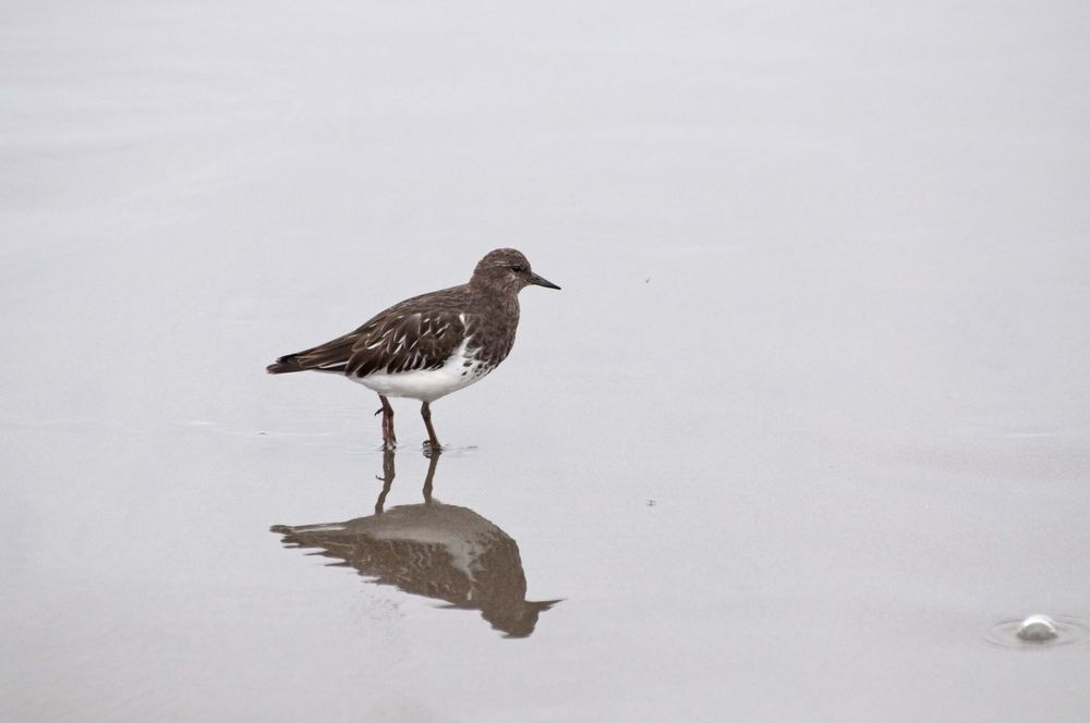 A Bird in North Jetty at Ocean Shores