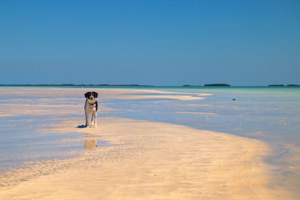 A Dog in Dog Beach, Key West