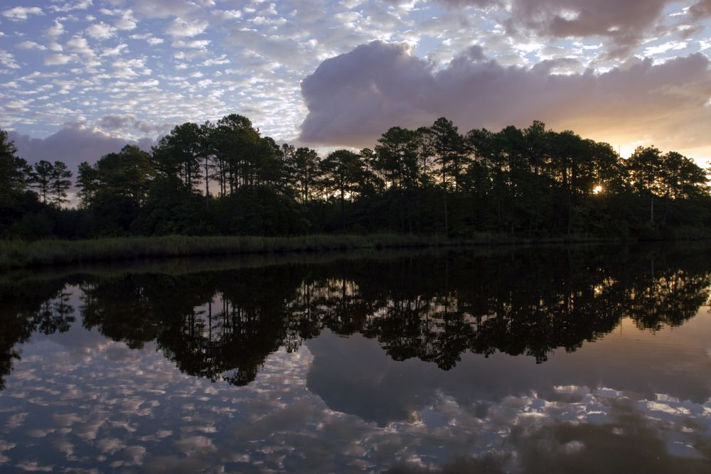 Silhouette along the Neuse River in North Carolina