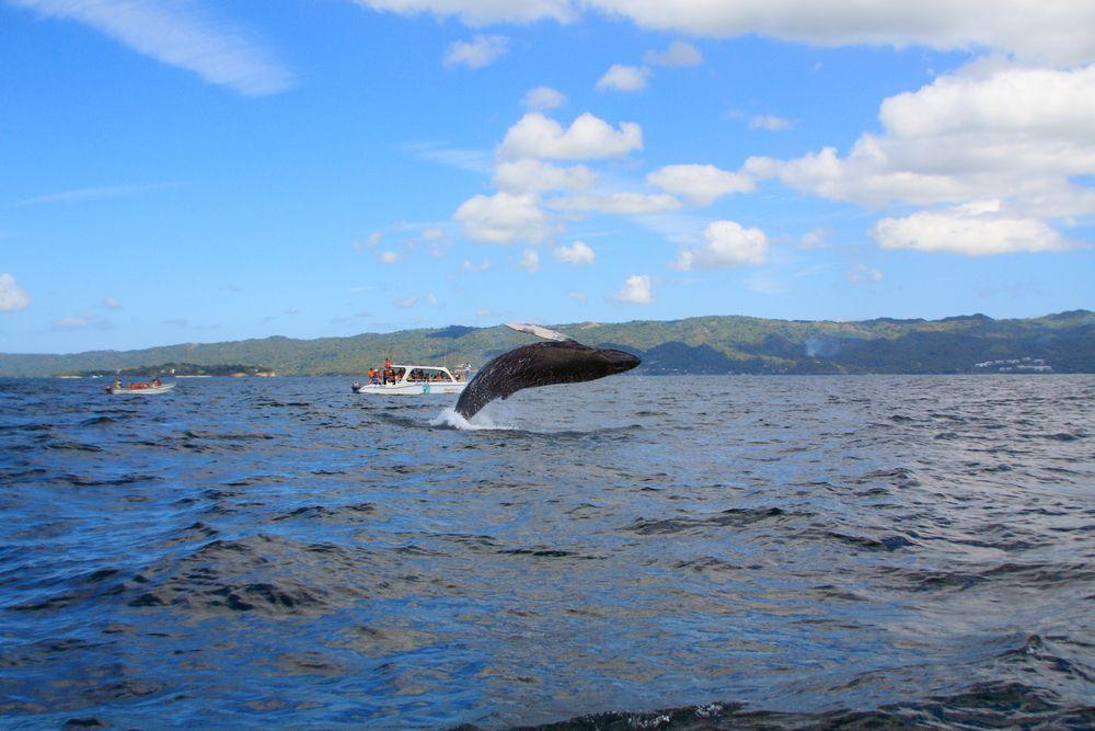 Whale-watching at Samana Bay