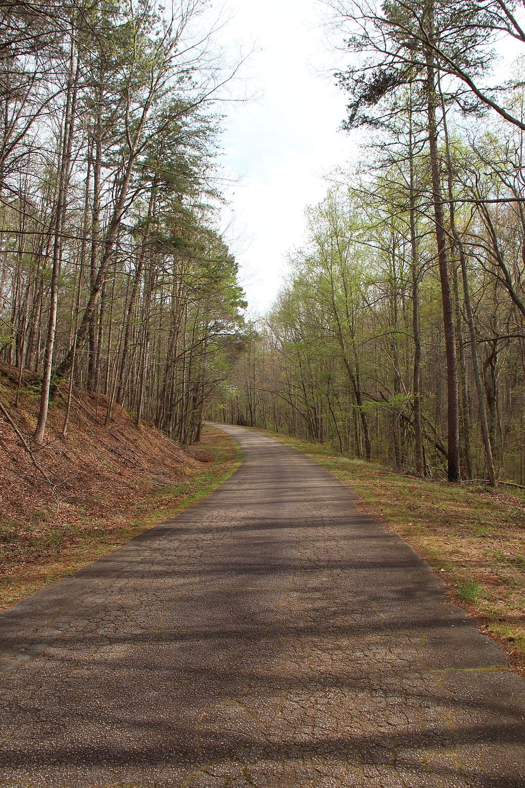 A Road in Dawson Forest