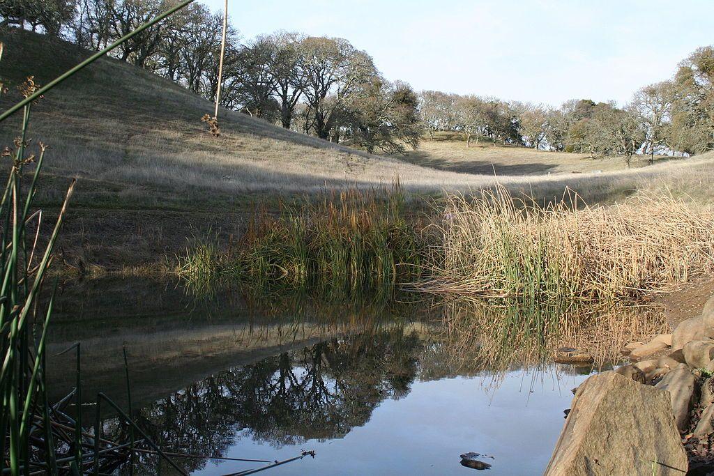 Pond at Augustin Bernal Park