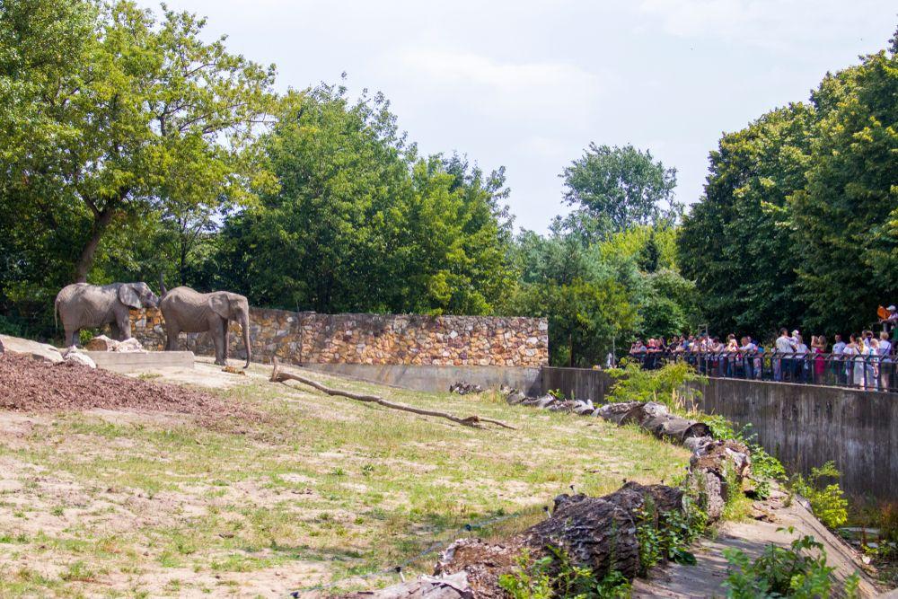 Elephant at Warsaw Zoo