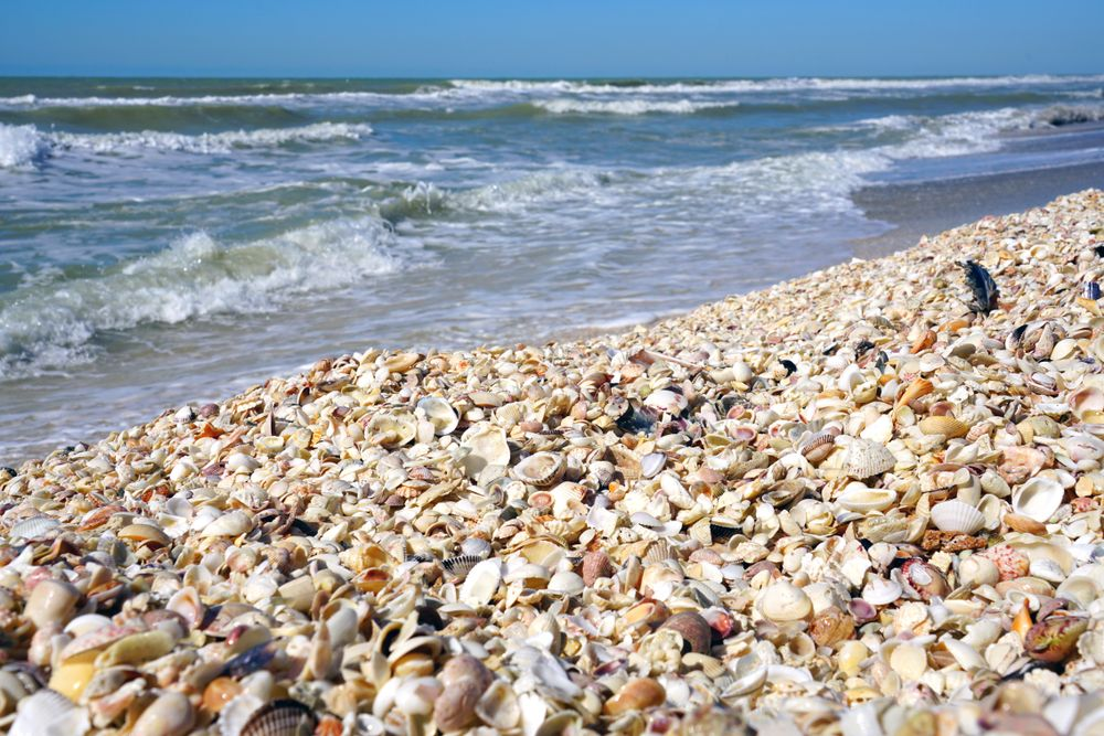 Shells in Sanibel Island