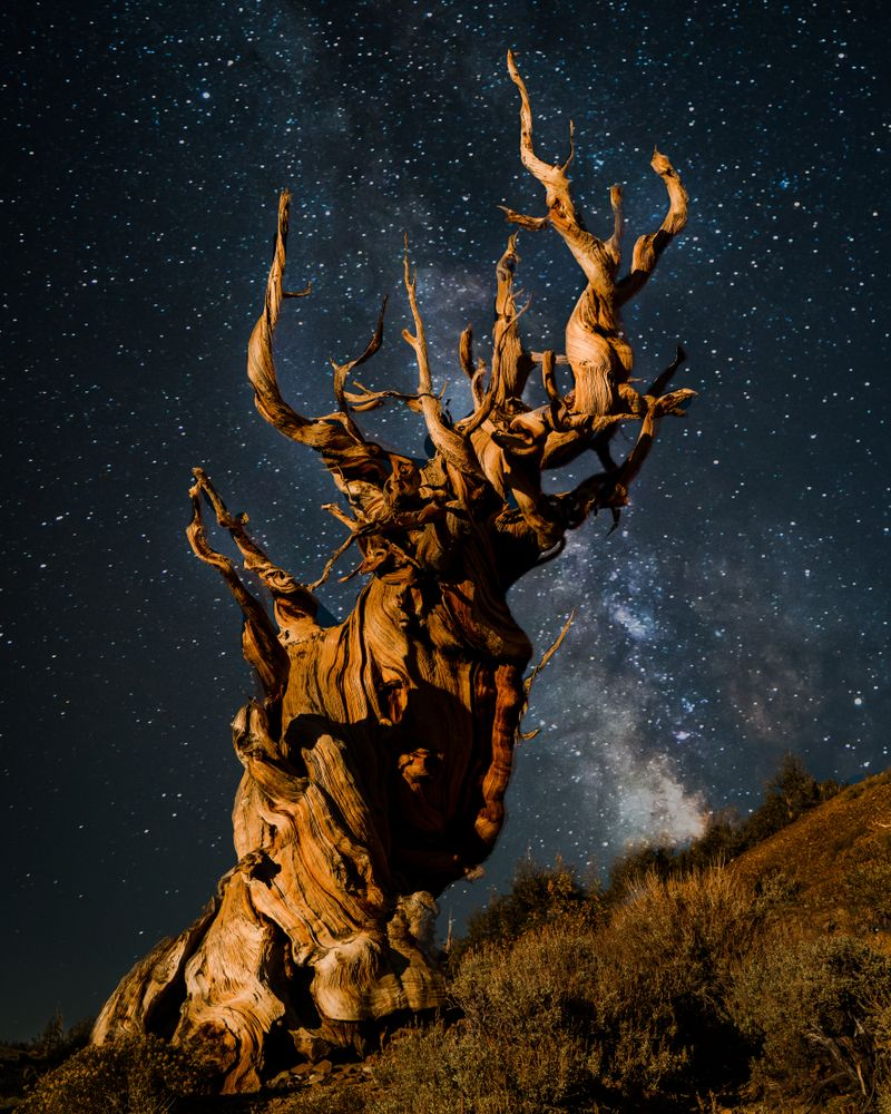 View of Ancient Bristlecone Pine Forest