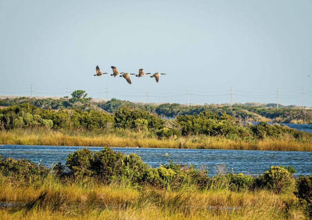 View of Pea Island National Wildlife Refuge