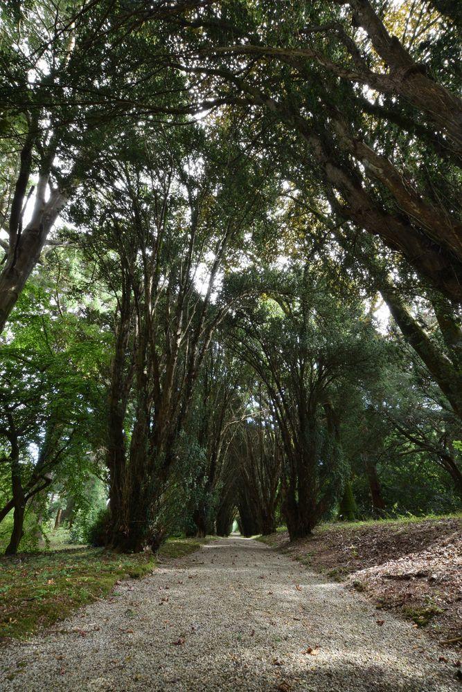 A PAth in Tregrehan Garden