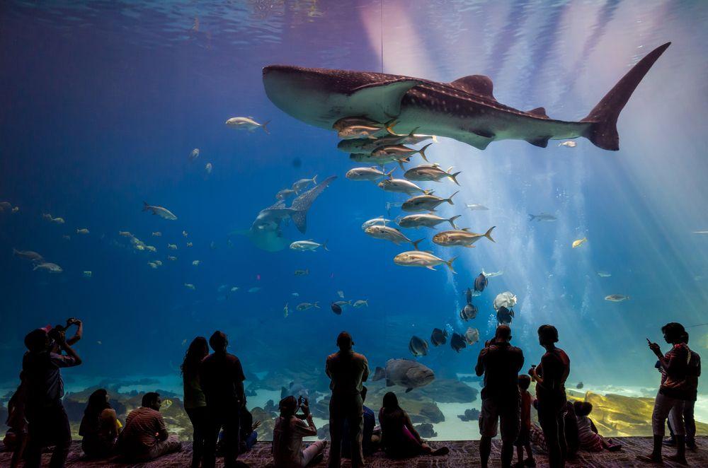 View of Georgia Aquarium