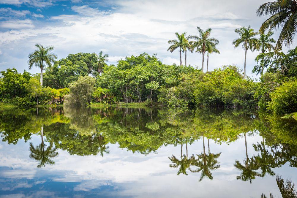 Palm Trees in Fairchild Tropical Botanic Garden