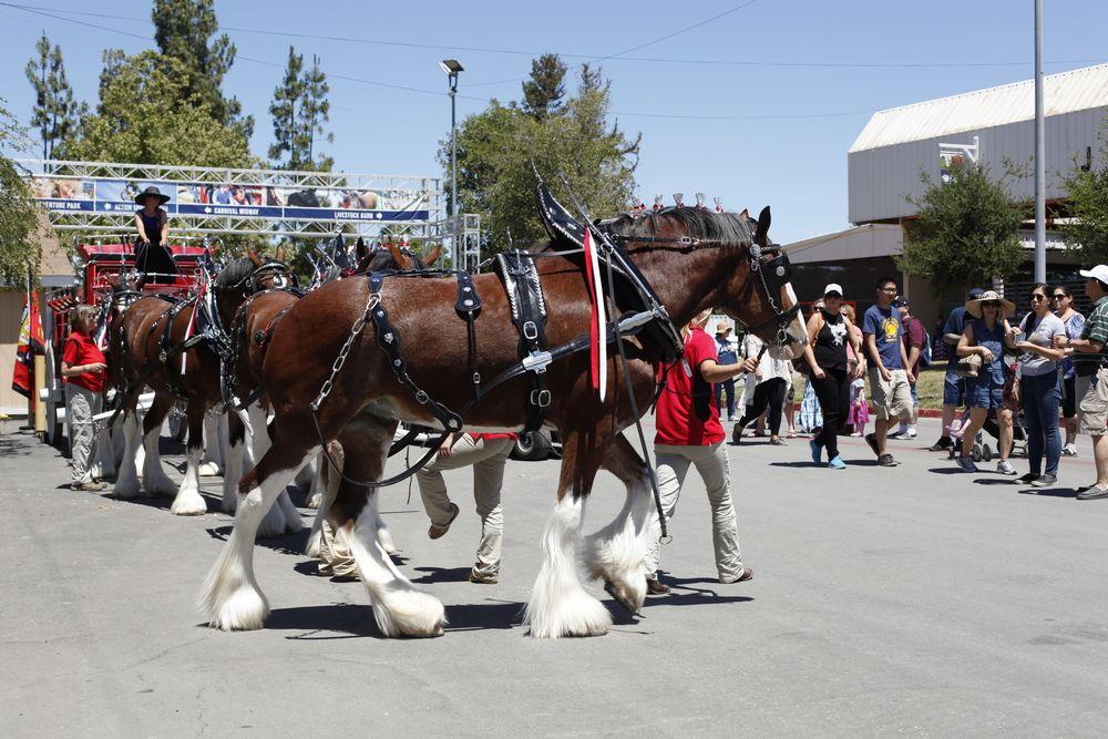Horse parade at Alameda Country Fair
