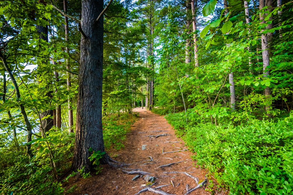 Trail at Ahern State Park