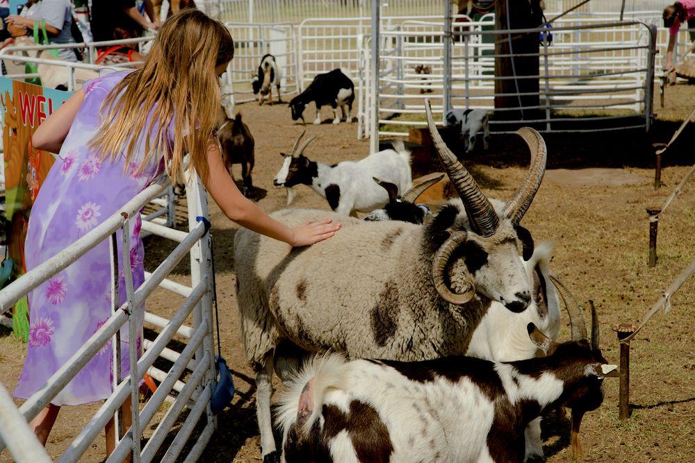 Petting Zoo in Kansas State Fair
