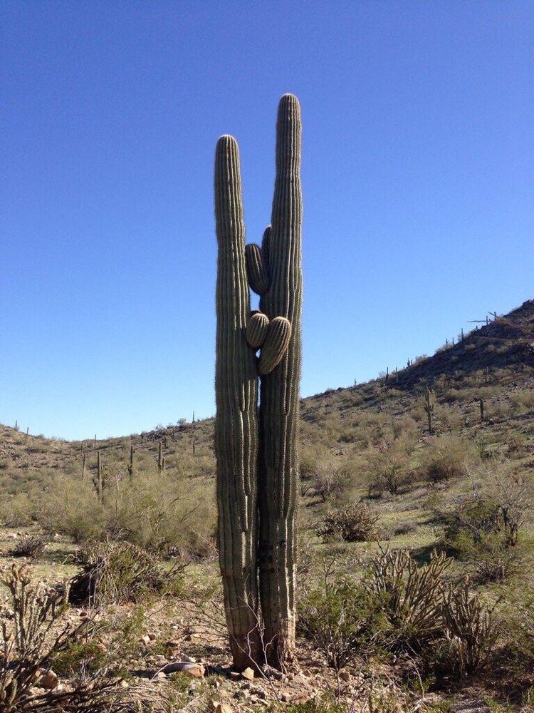 A Cactus in  Estrella Mountain Regional Park