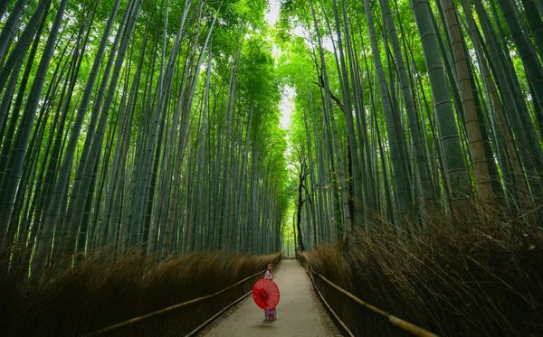 20 Best Things to Do in Arashiyama