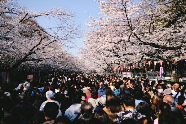 15 Best Things to Do in Ueno
