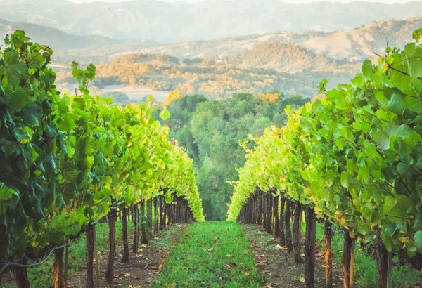 15 Best Things to Do in Healdsburg, California