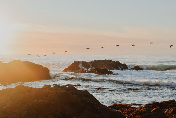 20 Best Things to Do in Pacific Grove, California
