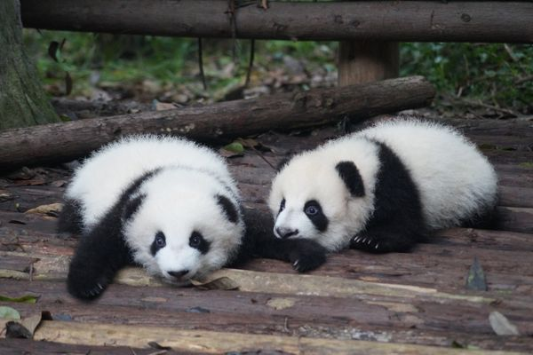 15 Best Things to Do in Chengdu
